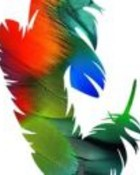 Adobe Photoshop.jpg wallpaper 1
