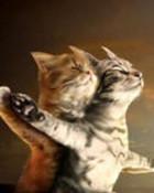 Titanic Cats wallpaper 1