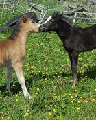 Foals_6.jpg