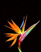 Exotic Flower.jpg