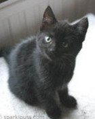 adopt-kitten012L.jpg