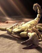 Sand-Scorpion.jpg