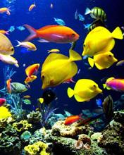 Free aquarium.jpg phone wallpaper by teammojo