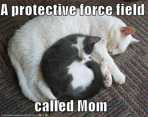Free funny-pictures-kitten-has-a-protective-forcefield.jpg phone wallpaper by sexy_boy