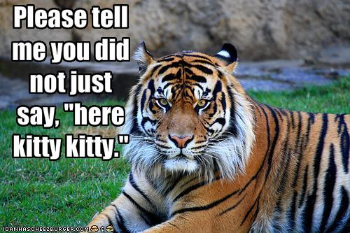 Free funny-pictures-tiger-does-not-appreciate-being-called-kitty.jpg phone wallpaper by sexy_boy