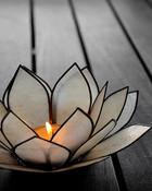 candel flower.jpg
