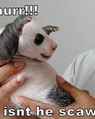 scary-baby-panda.jpg