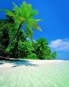 palm&beach