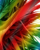 rainbow burst.jpg