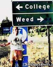 Free college-or-weed.jpg phone wallpaper by hitooshimoo