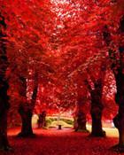 Nice_Nature.jpg