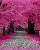 Love_Pink_Road.jpg
