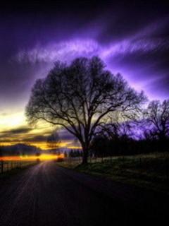 Free Tree.jpg phone wallpaper by hotsonyasone