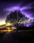 Tree.jpg wallpaper 1