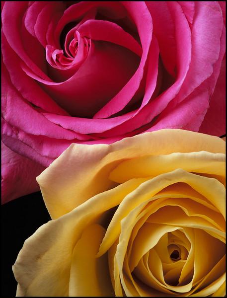 Free PinkandYellow Rose phone wallpaper by brandiwig84