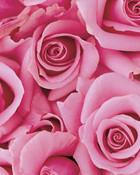 pink-roses wallpaper 1