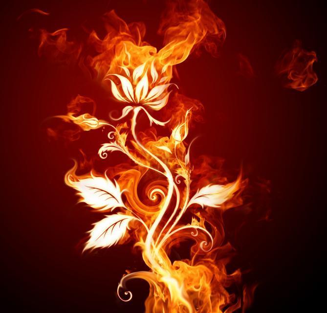 Free fire-rose phone wallpaper by brandiwig84