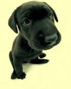 Black Puppy.jpg