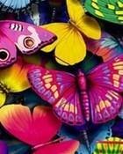 Butterflies wallpaper 1