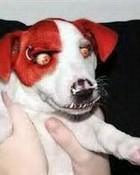 badassdog.jpg