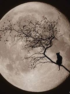 Free full moon phone wallpaper by stephanie91583