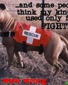 rescue pit bull.jpg