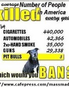pit-bull-stats.jpg