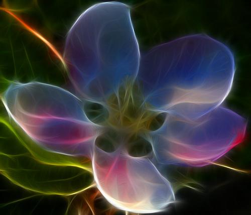 Free neon apple blossom phone wallpaper by brandiwig84
