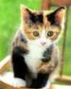 thcute-kitt.jpg