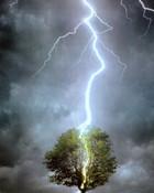 Tree with lightning bolt wallpaper 1