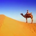 Free Camel.jpg phone wallpaper by iamlal2