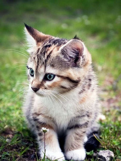 Free very_cute_kitten.jpg phone wallpaper by mzgenie225