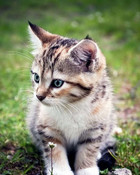 very_cute_kitten.jpg