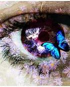 Butterfly eye