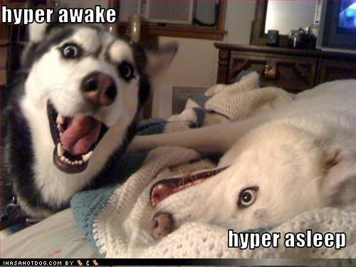 Free funny dogs.jpg phone wallpaper by niicol33x22