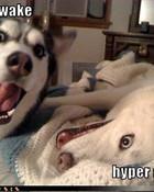 funny dogs.jpg wallpaper 1