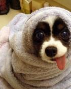 seal dog.jpg