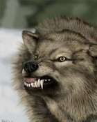 pissed off wolf