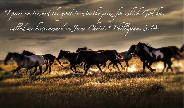 Free wildhorses.jpg phone wallpaper by hayy2012