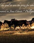 wildhorses.jpg