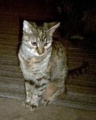 cats 037.JPG