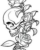 skullandrose