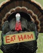 eat-ham-thanksgiving-card.jpg