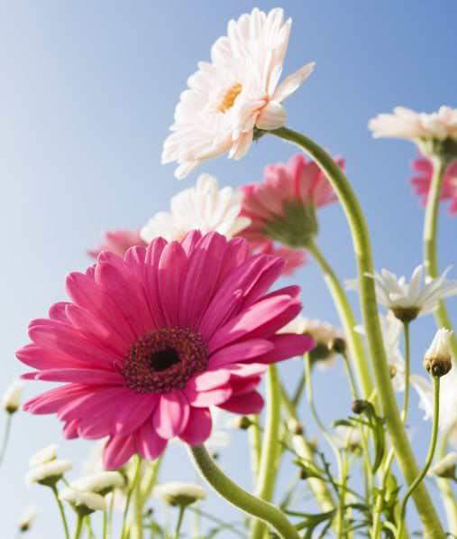 Free Blue Sky & pink flowers.jpg phone wallpaper by goddess72
