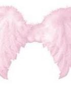 pink wings 320x240.jpg