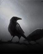 the crow 320x240.jpg