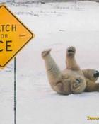 funny-polar-bear-pic-img121.jpg