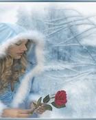 Winter Rose 320x240.jpg