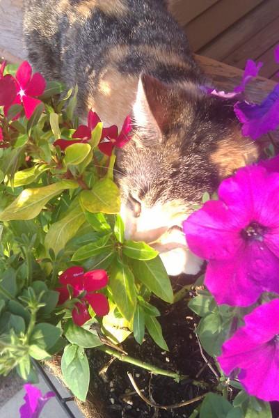 Free MC smelling the flowers.jpg phone wallpaper by bballwarrior24
