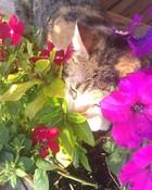 MC smelling the flowers.jpg wallpaper 1